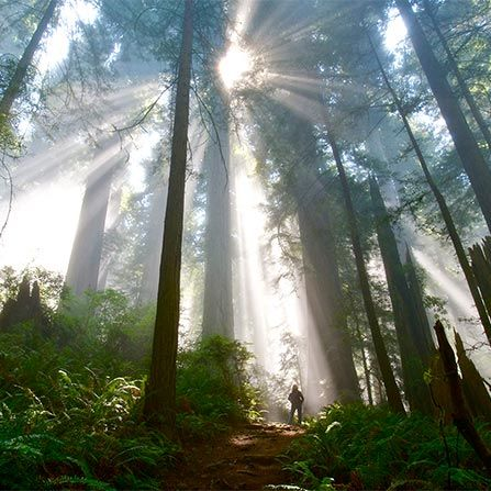 Gallery Image - Del Norte Redwoods SP