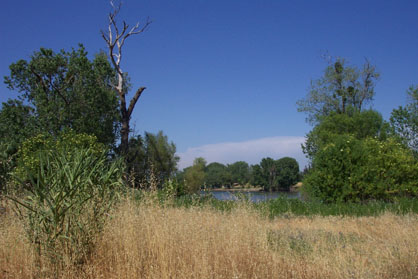 View of the Sacramento River from the CIHC site