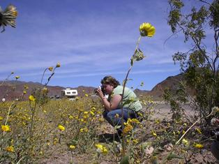 Kelly Long taking photos of Death Valley flowers, Spring Break 2005