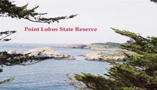 The pre Gold Rush era shipwreck Star of the West  is purported to lie within the Point Lobos underwater park.