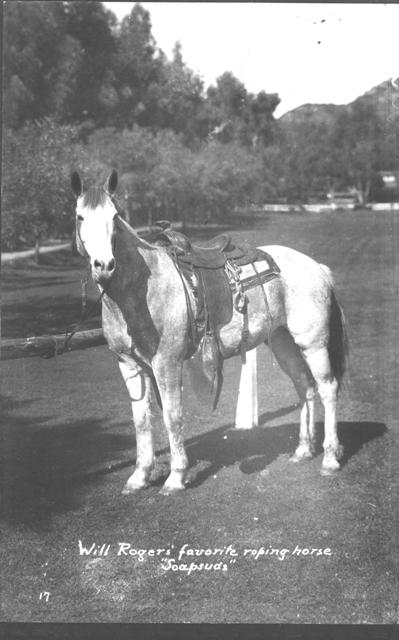 Soapsuds, Will Rogers' Favorite Roping Horse