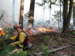 Prescribed Burn at Calaveras Big Trees State Park