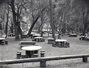 Hisrtoric photo of the 1935 CCC built picnic tables at Big Basin
