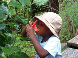 Boy Smelling Flower image