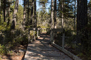 Pygmy Forest boardwalk entry