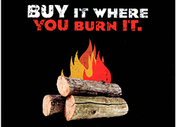 Don't Move Firewood Icon