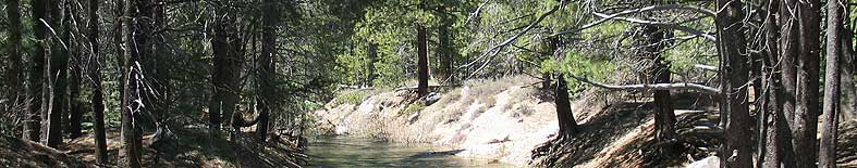 View of creek through forest at Donner Memorial SHP