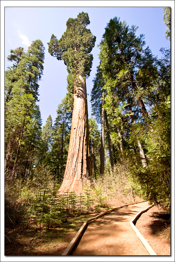 Calaveras Big Trees Trail