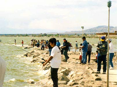Salton Sea Fishing