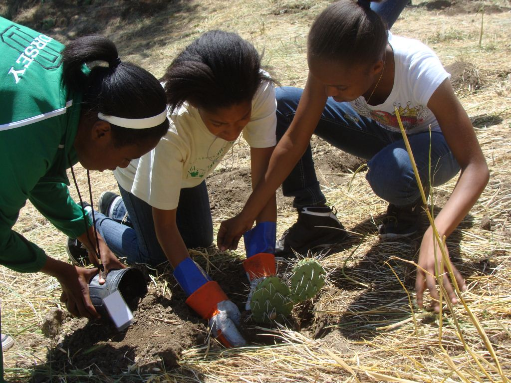 Dorsey High School girls restoring native plants
